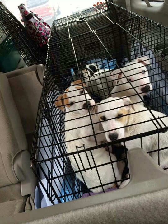 2 puppies to San Antonio